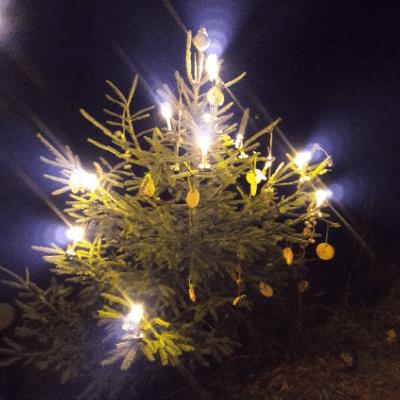 Nachhaltiger Weihnachtsbaum - Öko, Bio oder Naturland zertifiziert